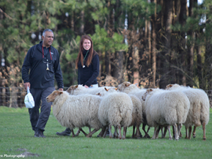 Sheepdog Training for Farmers