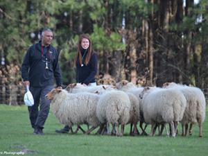 Sheepdog Training for Farmers