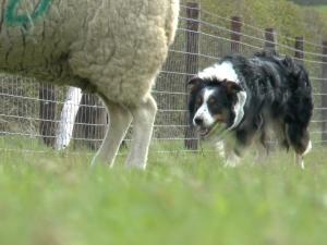 Practical Shepherding Complete Online Series