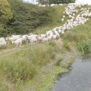 Flockwork